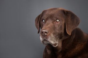 Gesunde Hundenahrung
