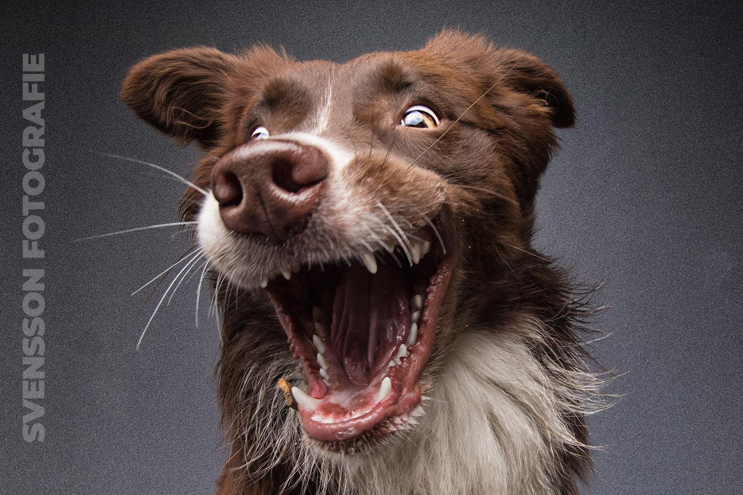 Hunde schnappen Hundefutter und Leckerchen
